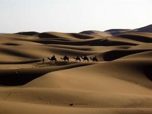 Wüste und die unvergleichliche Ruhe