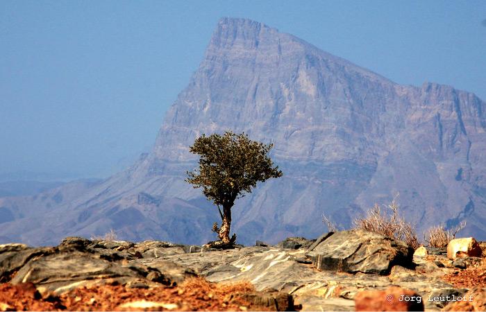 Höhenschwindel beim Jebel Shams